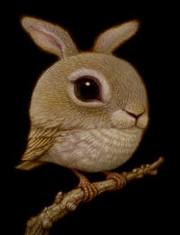 'Rabbit Bird'