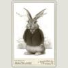 Jackalope_Travis_Louie_800