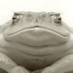 Oscar_Toad_Travis_Louie_detail