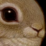 Rabbit_Bird_Naoto_Hattori_Detail
